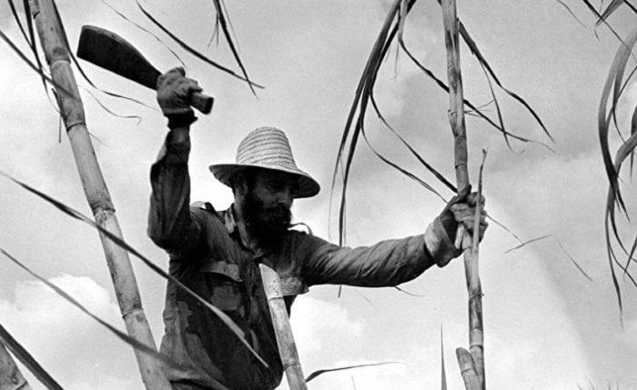 Фидель Кастро при помощи мачете рубит тростник